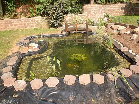 Koi und naturteiche for Fische teich ohne pumpe