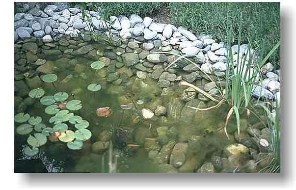 for Algen im teich